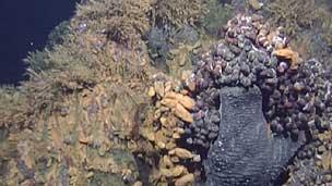 Imagem capturada por robô submarino (Cortesia: Universidade de Southampton)