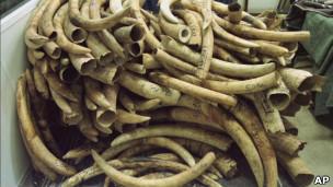 Colmillos de elefantes