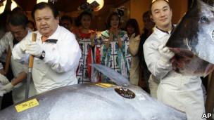 Cá ngừ xanh được bán với giá kỷ lục tại Nhật