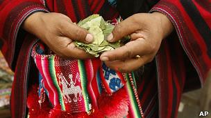 Folha de coca na Bolívia. AP