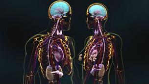 Atracción sexual en el cerebro
