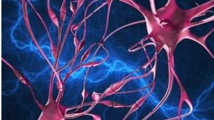 Hallan cómo se propaga el Alzheimer en el cerebro   120202130023_sinapsis_304x171_spl_nocredit