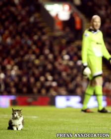 Gato que invadiu o campo em partida do Liverpool vira sucesso na internet