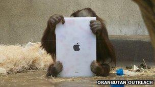 Simio son iPad