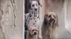 O anúncio para cães (BBC)