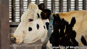 tecnologia de texto para vacas