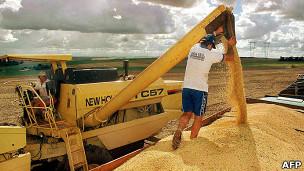 Зерно сыпется с комбайна
