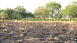 Sequía en Paraguay