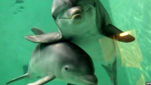 Дельфины в Дуйсбургском зоопарке