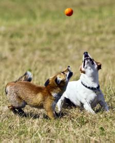Anuska e Sadie disputam uma bola