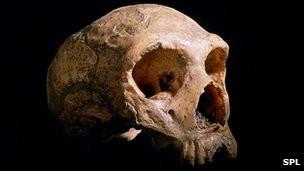 120228154418_neanderthals_skull_304x171_