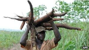 hombre sostiene yuca