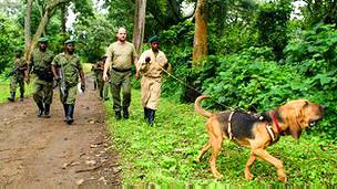 Un perro sigue la pista de cazadores furtivos en el Parque Nacional Virunga