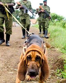Perro siguiendo la pista de cazadores furtivos