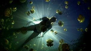 Mujer nadando con medusas