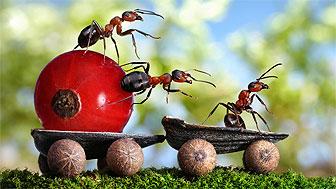 Formigas fotografadas por Andrey Pavlov. Foto: Caters