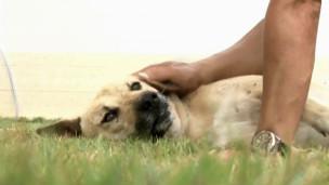 Cão Tao Tao