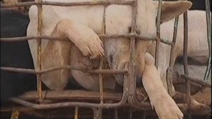 Cão em gaiola