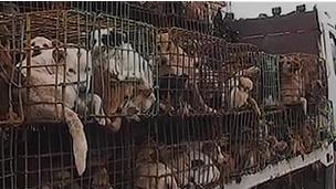 Perros hacinados por contrabando