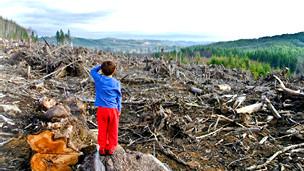 Niño mirando un campo desforestado foto gentileza Banco Mundial