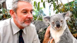 Peter Timms junto a un koala
