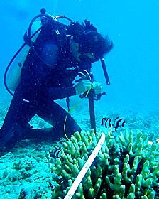 Científico examina corales durante la expedición de la Universidad de Stanford al Pacífico Sur