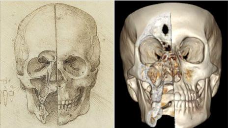 Cráneo de da Vinci y cráneo real