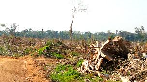 Desforestación en la Amazonia peruana Foto gentileza Víctor Gutiérrez