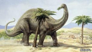 Ilustração de Apatossauro. | Foto: Natural History Museum Photo Library
