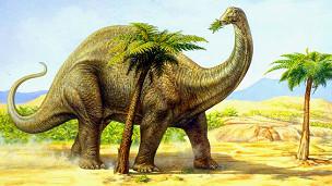 Apatosaurus louise o Brontosaurio, dinosaurio que medía cerca de 4,5 metros de altura