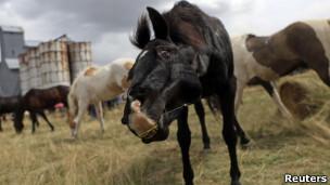 Cavalos | Foto: Reuters