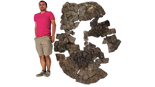 Edwin Cadena compara su altura al tamaño de la caparazón de la tortuga gigante