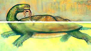 Ilustración de la tortuga gigante encontrada en Colombia Ilustración de Liz Bradford