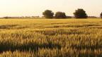 """Foto de un lector de BBC Mundo por el tema """"campos"""""""
