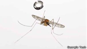 Mosquito durante experimento científico