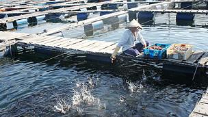 Trại nuôi cá của người Trung Quốc ở Cam Ranh