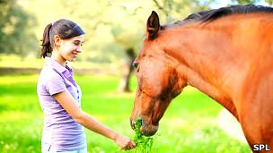 Adolescente dando pasto a un caballo Foto: SPL