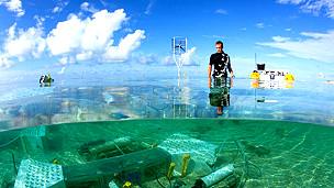 Un minilaboratorio permite predecir los océanos del futuro