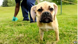 Dono coleta fezes deixadas por seu cão na rua (Foto: AP)