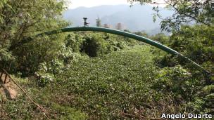 Plantas que cobrem rio próximo ao Riocentro. (Foto: Angelo Antonio Duarte)