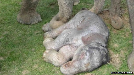 http://wscdn.bbc.co.uk/worldservice/assets/images/2012/06/20/120620102430__61010626_5_elephantcalf.jpg