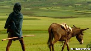 warga ethiopia