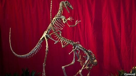 El ancestro argentino del Tiranosaurio Rex