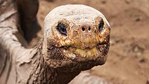 Solitario Jorge Foto: gentileza Dirección del Parque Nacional Galápagos