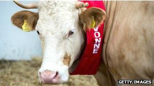 La vaca Yvonne es una de los animales que han estado pronosticando resultados de la Eurocopa.