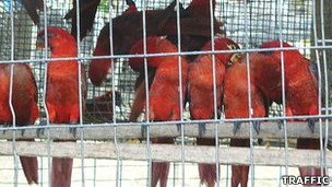 aves_exoticas_traffic