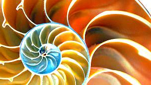 Interior de un molusco con nácar Foto: Lawrence Laury/SPL