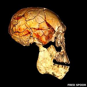 Nueva especie humana en África