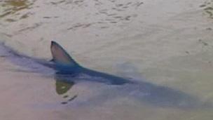 Imagens feitas por banhista mostram tubarão nadando calmamente (BBC)