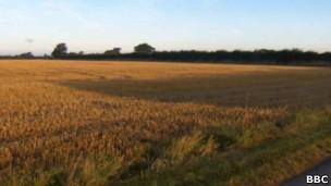 Campo onde leão teria sido avistado